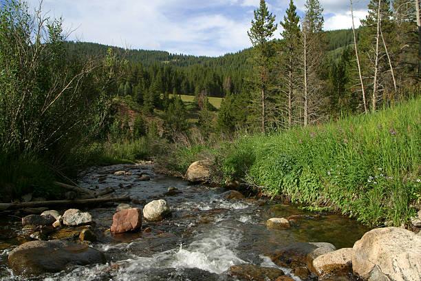 Rocky Mountain Stream – Foto