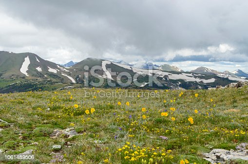 Here is another view from one of the summits in Rocky Mountain National Park. This image shows flowers growing in the tundra above the tree line and peaks still covered in snow.  I believe the yellow flowers are called Snow Buttercups.  The