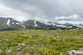 Here is another view from one of the summits in Rocky Mountain National Park. This image shows flowers growing in the tundra above the tree line and peaks still covered in snow.  I believe the yellow flowers are called Snow Buttercups.  The \