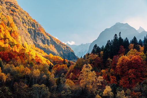 Rocky mountains and autumnal forest with colorful trees. High mountain landscape and amazing light