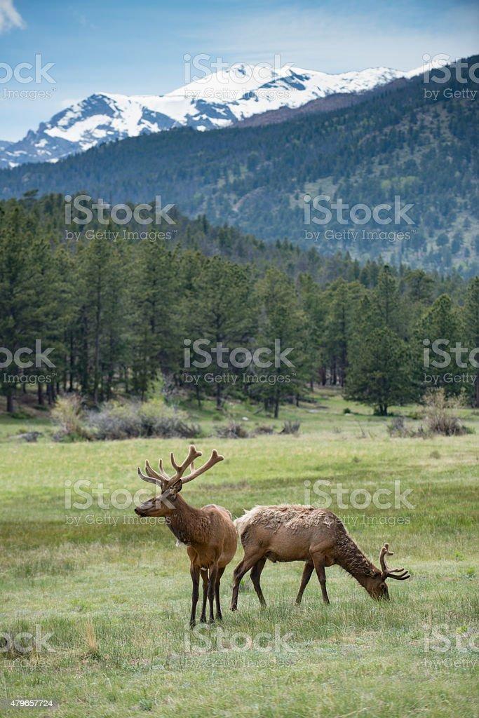 Rocky Mountains, Colorado stock photo