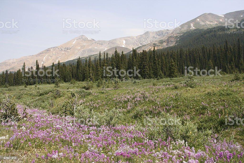 Rocky Mountains meadow royalty-free stock photo