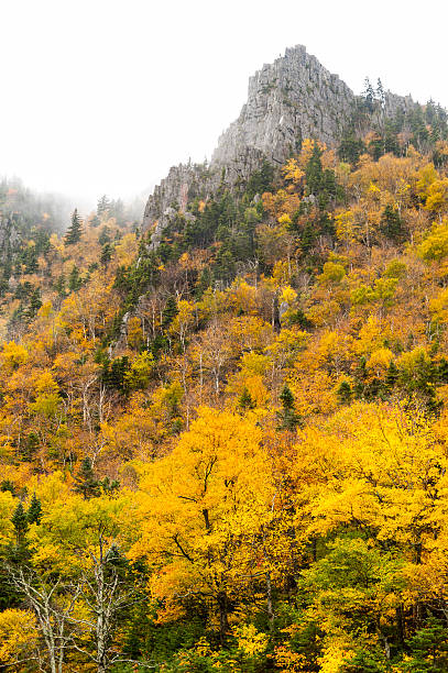 rocky peak, fog, color - dixville notch stockfoto's en -beelden