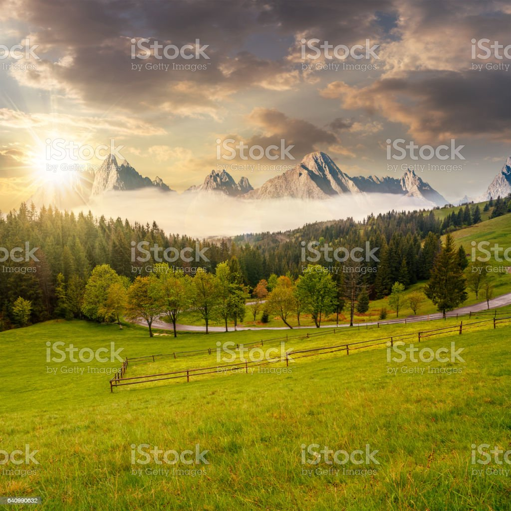 rocky peaks behind the forest and meadow at sunset stock photo