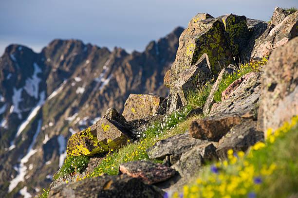 rocky steep alpine meadow in gore range colorado - telelens stockfoto's en -beelden