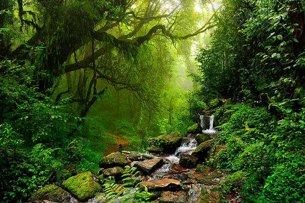 Rocky stream and rainforest in Selva de Nepal stock photo