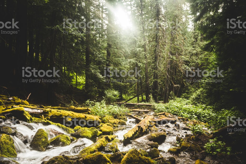Rocky Stream Flowing Through Lush Forrest stock photo
