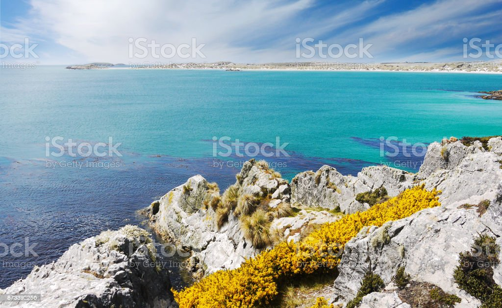 Rocky terrain of Falkland Islands coastline, introduced species of gorse flowers; turquoise water and dark blue of kelp in the sea. Gypsy Cove and Yorke Bay, East Falkland Island (islas malvinas). stock photo