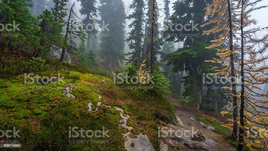 Rocky trail in the spruce forest among age-old spruces stock photo
