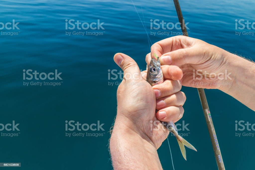 Rod fishing in the Black sea. Sardines are biting on a bare hook. royalty-free stock photo