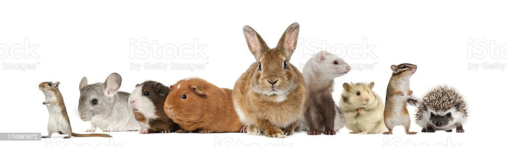 Rodent family of animals on white background stock photo