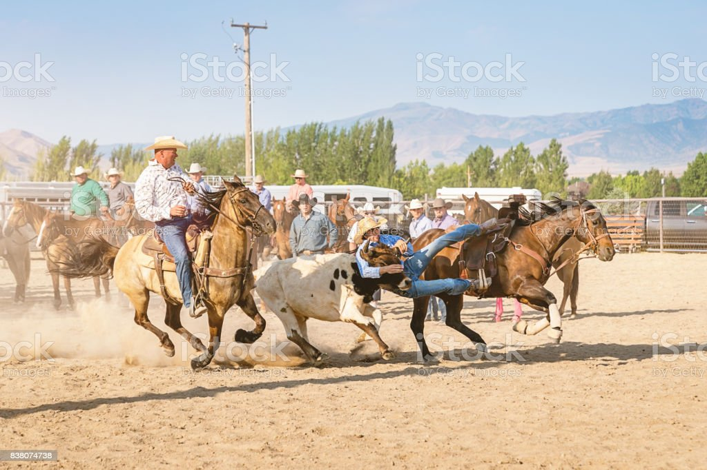 Rodeo Action Cowboys Bulldogging Steer Wrestling USA stock photo