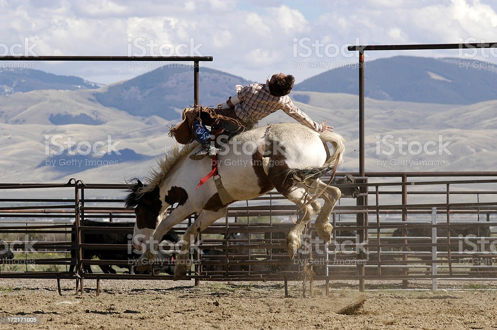 Rodeo Action stock photo