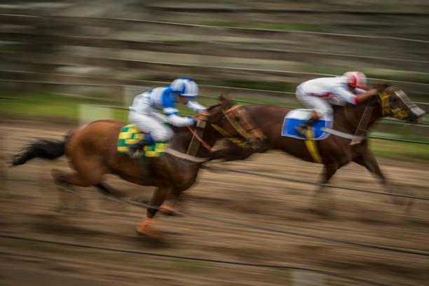 로데오-브라질 (rodeio crioulo) - horse racing 뉴스 사진 이미지