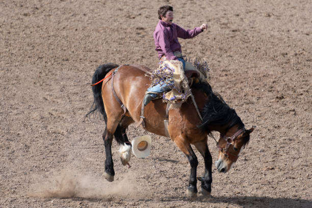 Rodeo bucking bronco event stock photo