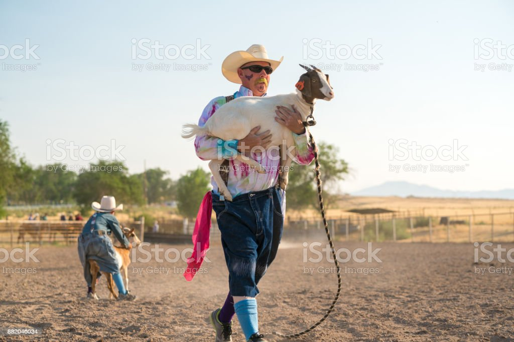 Rodeo clown carrying a goat stock photo