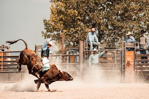 Cowboy riding a bull at rodeo arena