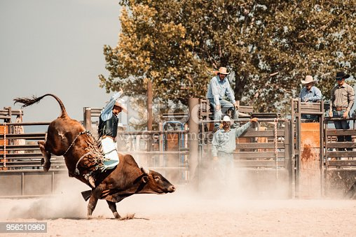 Cowboy riding a bull at rodeo arena