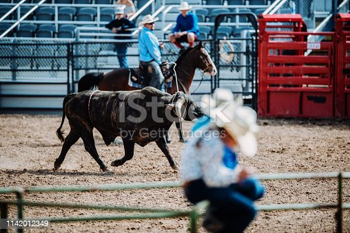 Rural living in ranch with horses and cattle. American countryside people enjoy rodeo and horse riding