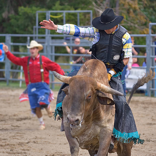 Rodeo cowboy riding a bull - head on stock photo