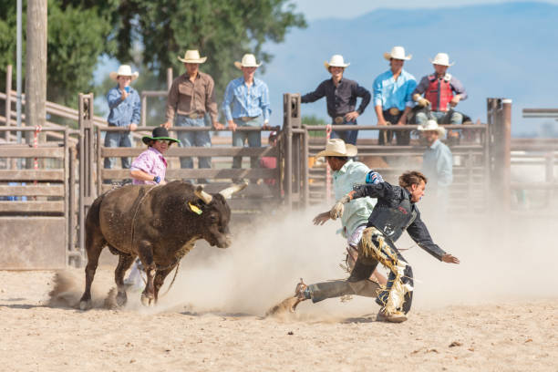 Rodeo Event Bull Chasing Cowboy USA Strong bull running after, chasing young cowboy in Rodeo Arena. Rodeo clown protecting cowboy in the arena. Rodeo Bull Riding Event. Spanish Fork, Utah, USA. bull animal stock pictures, royalty-free photos & images