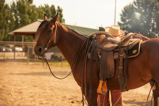 Rodeo Horse – Foto