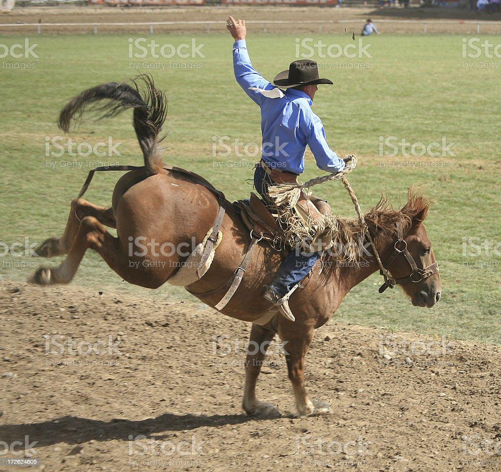 Rodeo rider on bucking horse stock photo