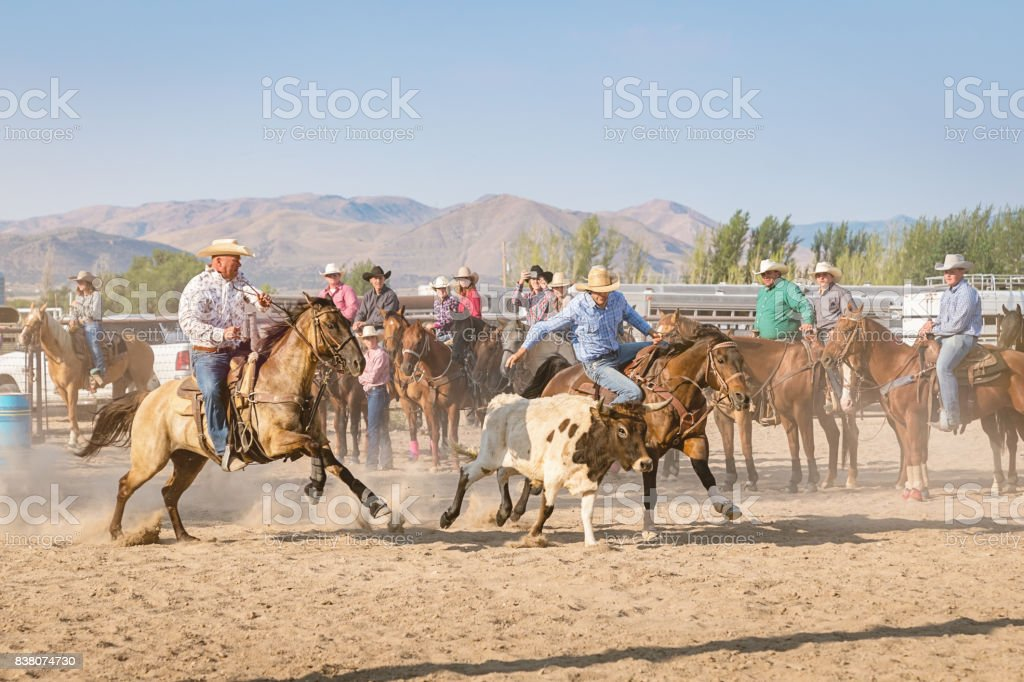 Rodeo Riding Action Cowboys Chasing Bull stock photo