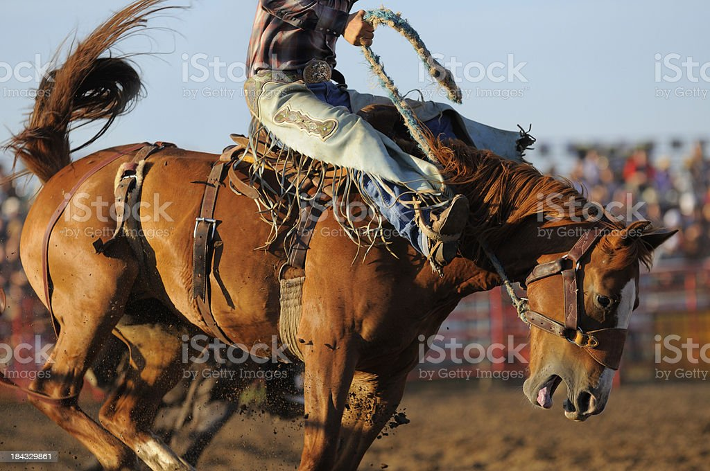 Rodeo Saddle Bronc stock photo