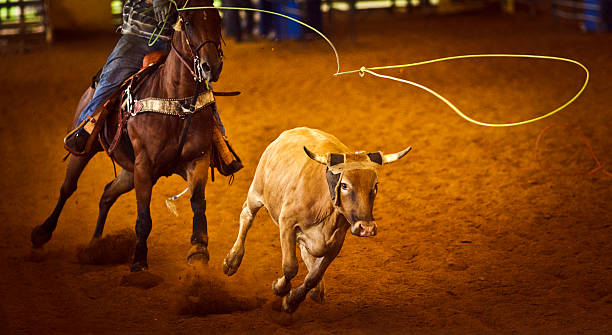 Rodeo equipo roping - foto de stock
