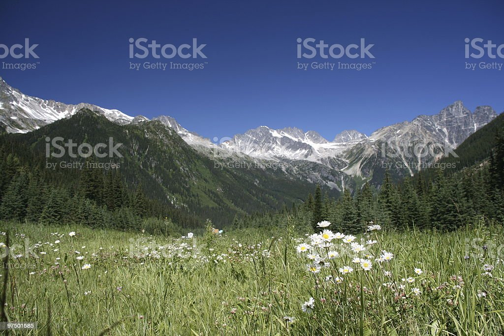 Rogers Pass - focus on flowers stock photo