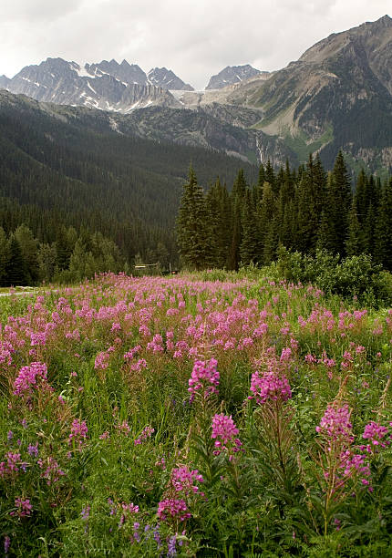rogers pass under mountain clouds - british columbia glacier national park stock pictures, royalty-free photos & images