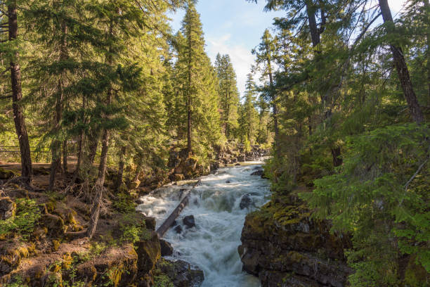 Rogue River-Siskiyou National Forest Rogue River-Siskiyou National Forest near Natural Bridge Recreation Area national forest stock pictures, royalty-free photos & images
