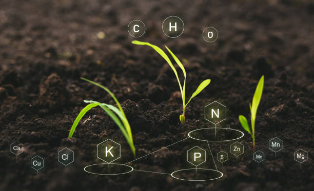 Role of nutrients in plant life for development. Soil with digital mineral nutrients icon. stock photo