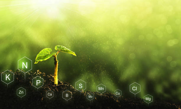 Role of nutrients in plant life. Soil with digital mineral nutrients icon. stock photo
