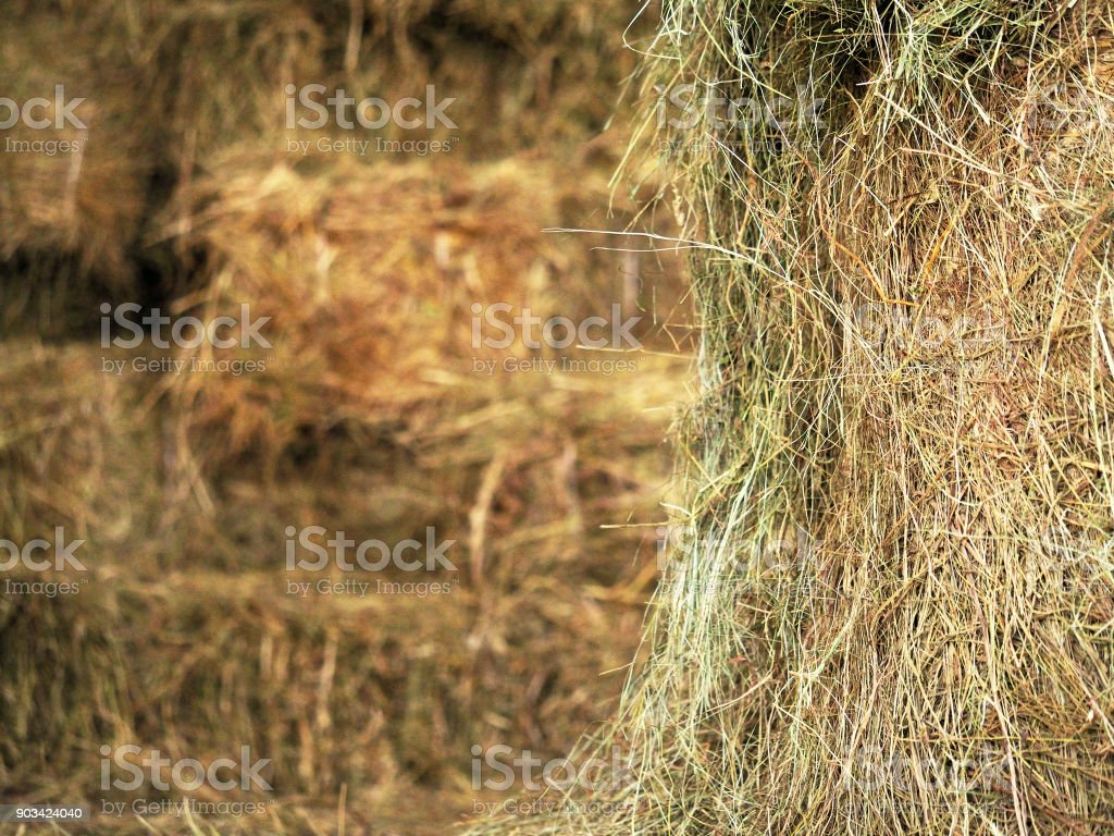 Roll of hay close-up on the background bales of hay and cereal straw, agricultural background. Feed and litter for cows, horses, goats and sheep stock photo