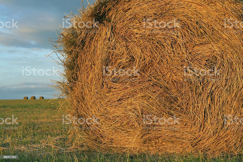 Rolled hay close-up royalty-free stock photo