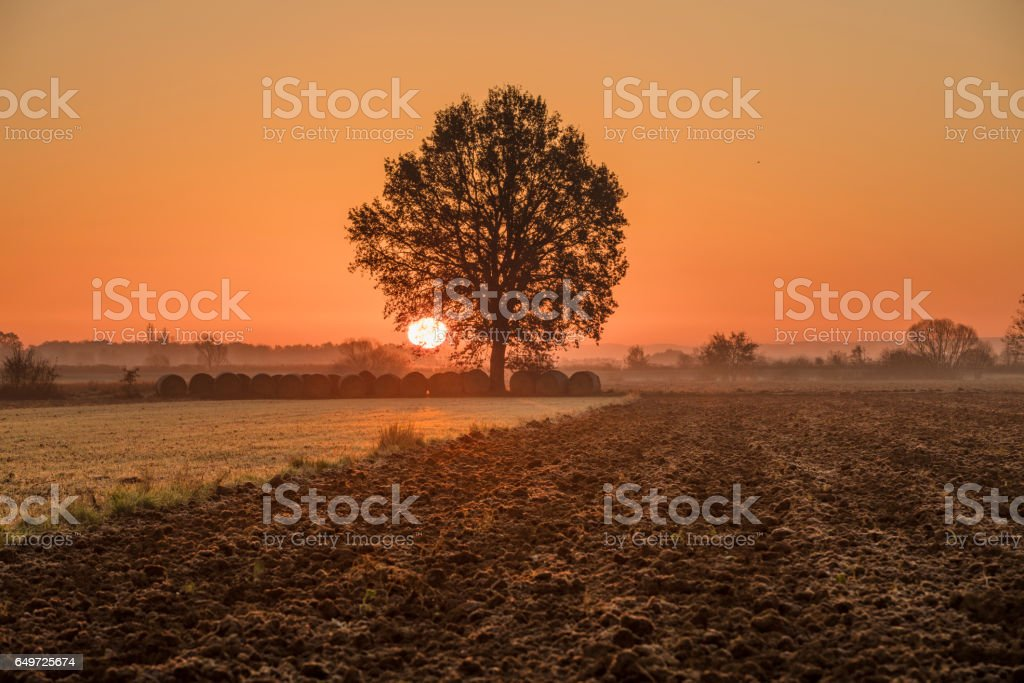 Rolled up bales and tree on farm during sunset stock photo