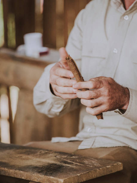 rolling a cigar - katiedobies stock pictures, royalty-free photos & images