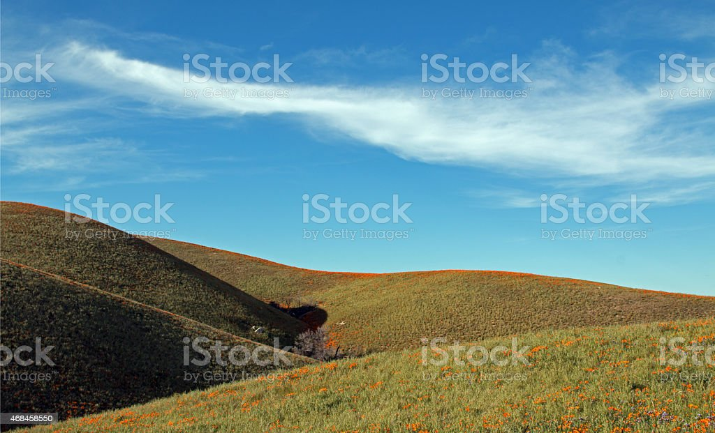 Rolling California Poppy Fields under Cirrus Cloud Skies stock photo
