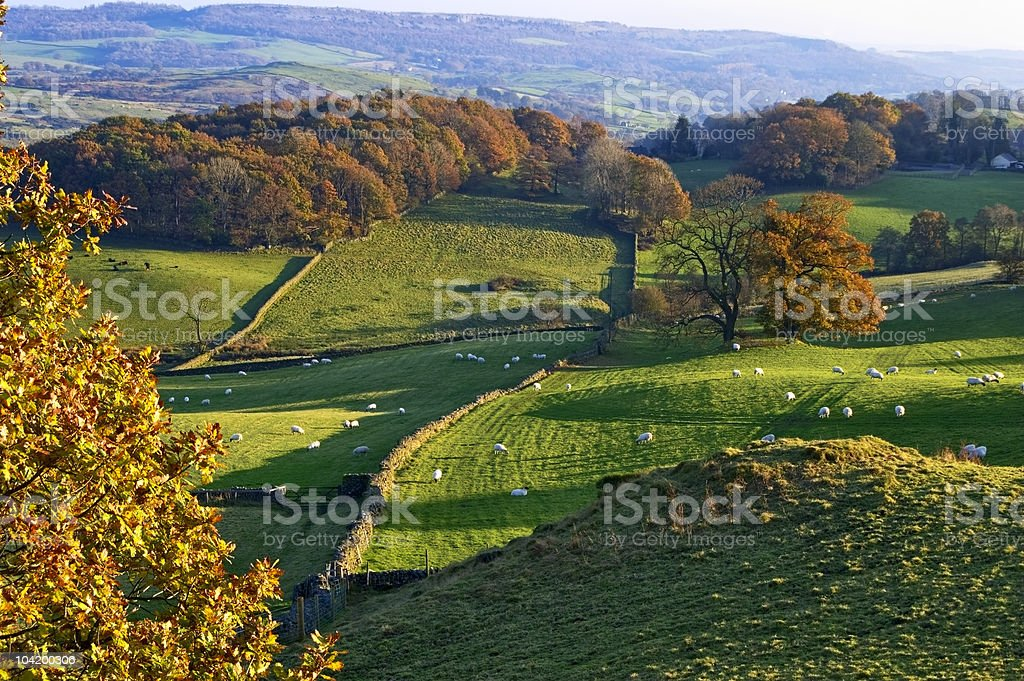 Rolling English countryside at dawn royalty-free stock photo