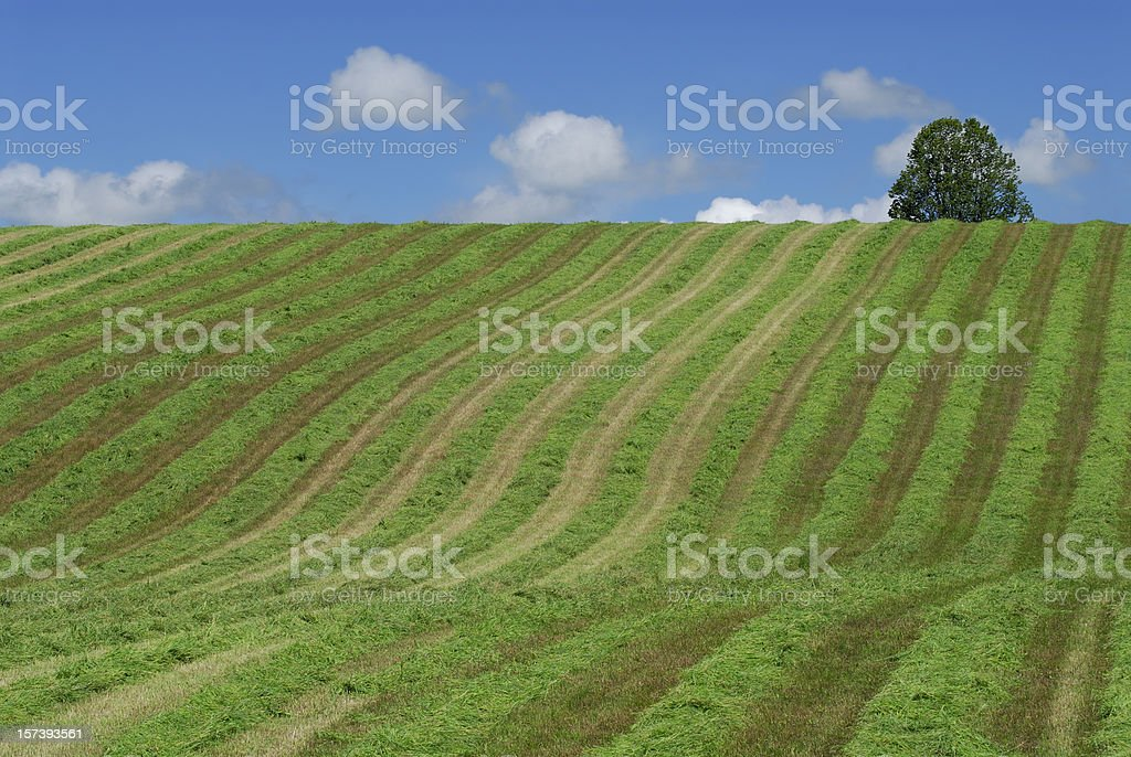 Rolling farm and tree stock photo