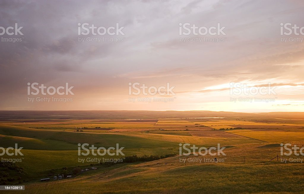 Rolling Fields of Gold and Brown (Oregon, USA) stock photo