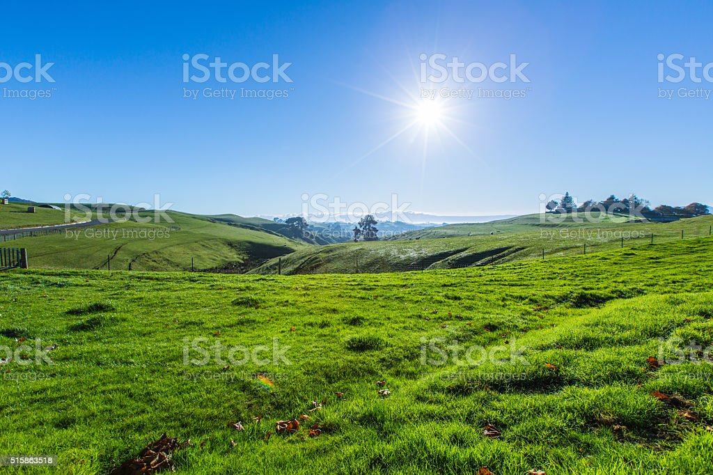 Rolling Grassy Hills in New Zealand stock photo