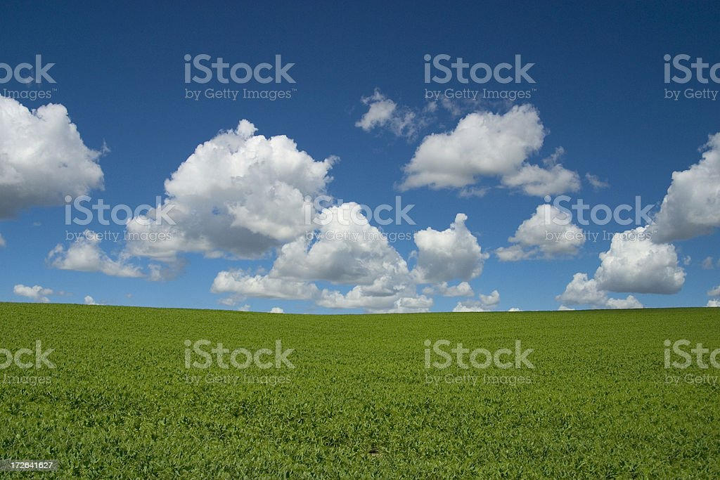 Rolling Green Field royalty-free stock photo
