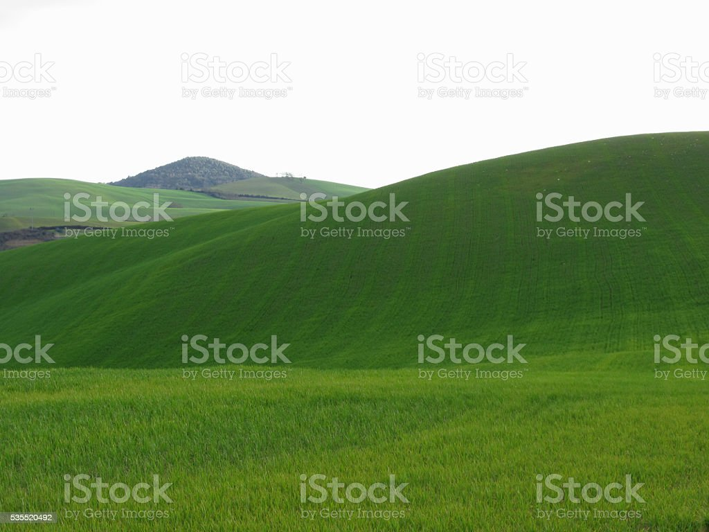 Rolling green hills in Tuscany, Italy stock photo