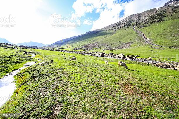 Photo of Rolling green hills