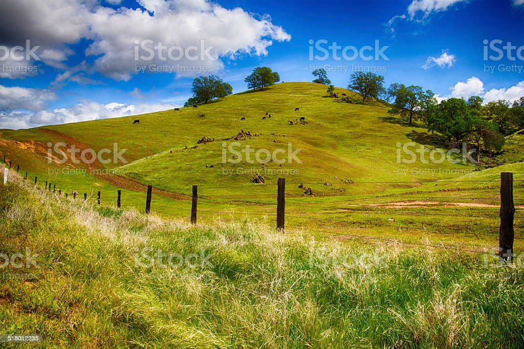Rolling Green Hills stock photo
