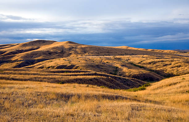 rolling hills and grasslands of montana at dawn - great plains stock photos and pictures