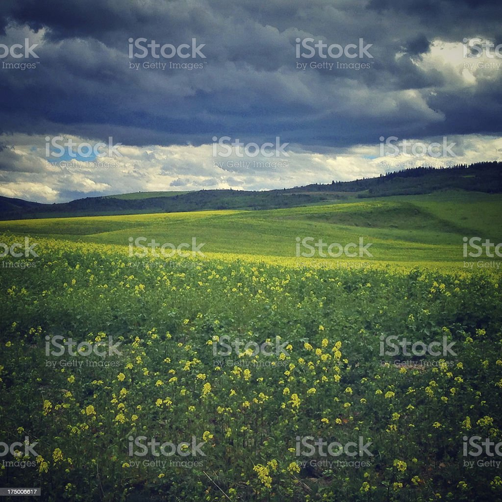 Rolling hills and stormy skies royalty-free stock photo